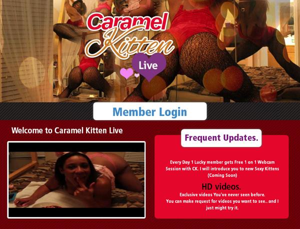 New Caramel Kitten Live